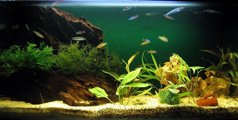 Best Filter For 5 Gallon Fish Tank