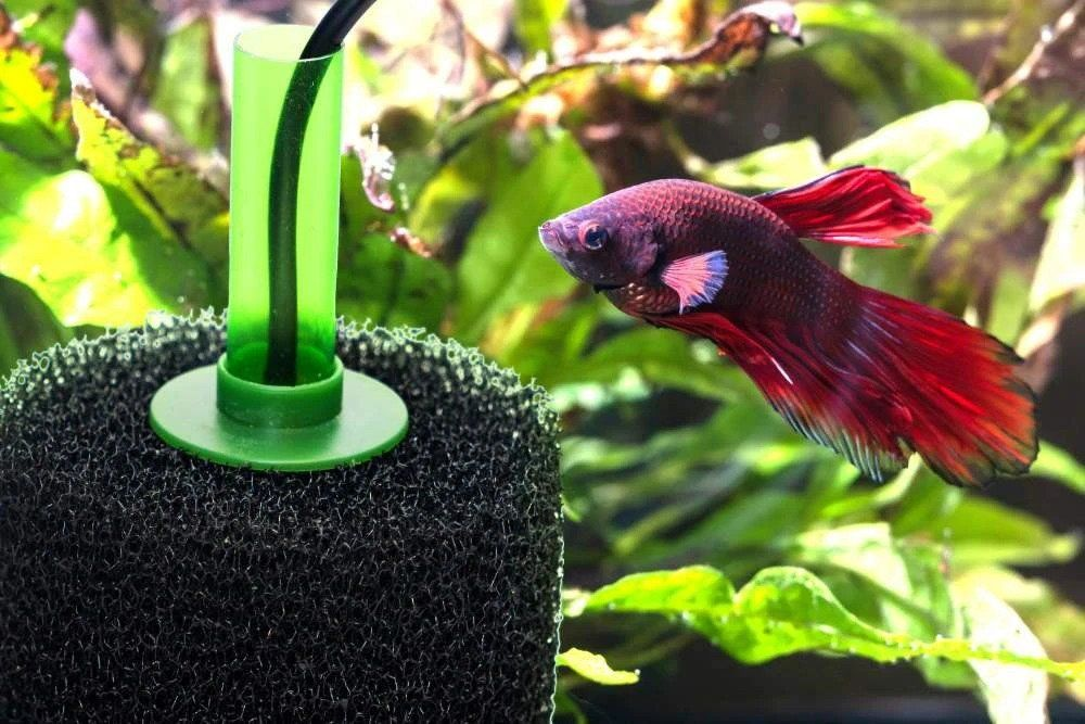 10 Best Sponge Filter in 2020 (Reviews & Buying Guide)