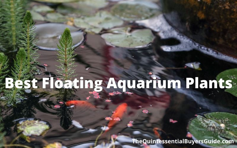 7 Best Floating Aquarium Plants (2020 Reviews & Guide)