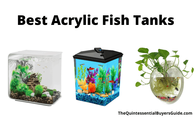 Best Acrylic Fish Tanks