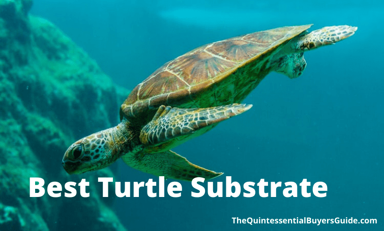 Best turtle Substrate