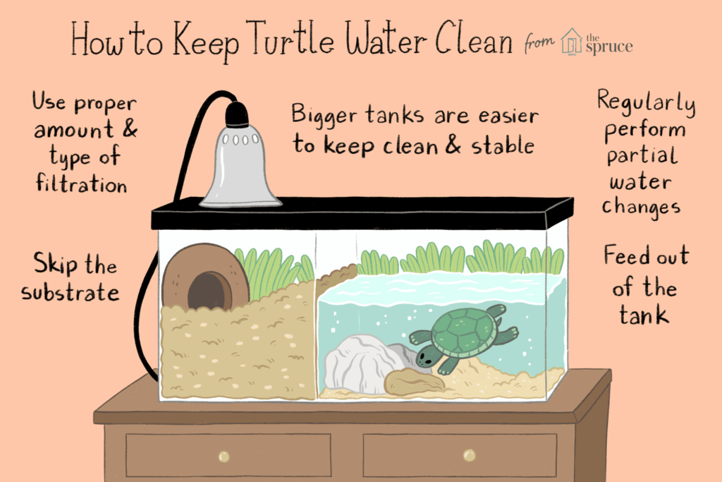 Water Changes in a Turtle tank